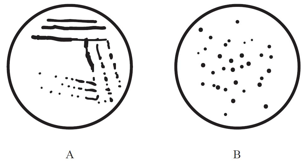 ===========突袭网收集的解决方案如下=========== 解决方案1: 一、平板划线分离法 由接种环以菌操作沾取少许待分离的材料,在无菌平板表面进行平行划线、扇形划线或其他形式的连续划线,微生物细胞数量将随着划线次数的增加而减少,并逐步分散开来,如果划线适宜的话,微生物能一一分散,经培养后,可在平板表面得到单菌落。 二、稀释倒平板法 先将待分离的材料用无菌水作一系列的稀释(如 1  10 、 1  100 、 1  1000 、 1  10000 ),然后分别取不同稀释液少许,与已溶化